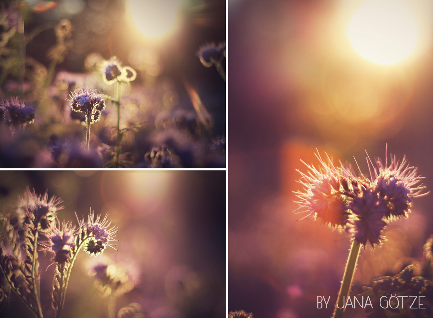Blogvorstellung_jana_032014